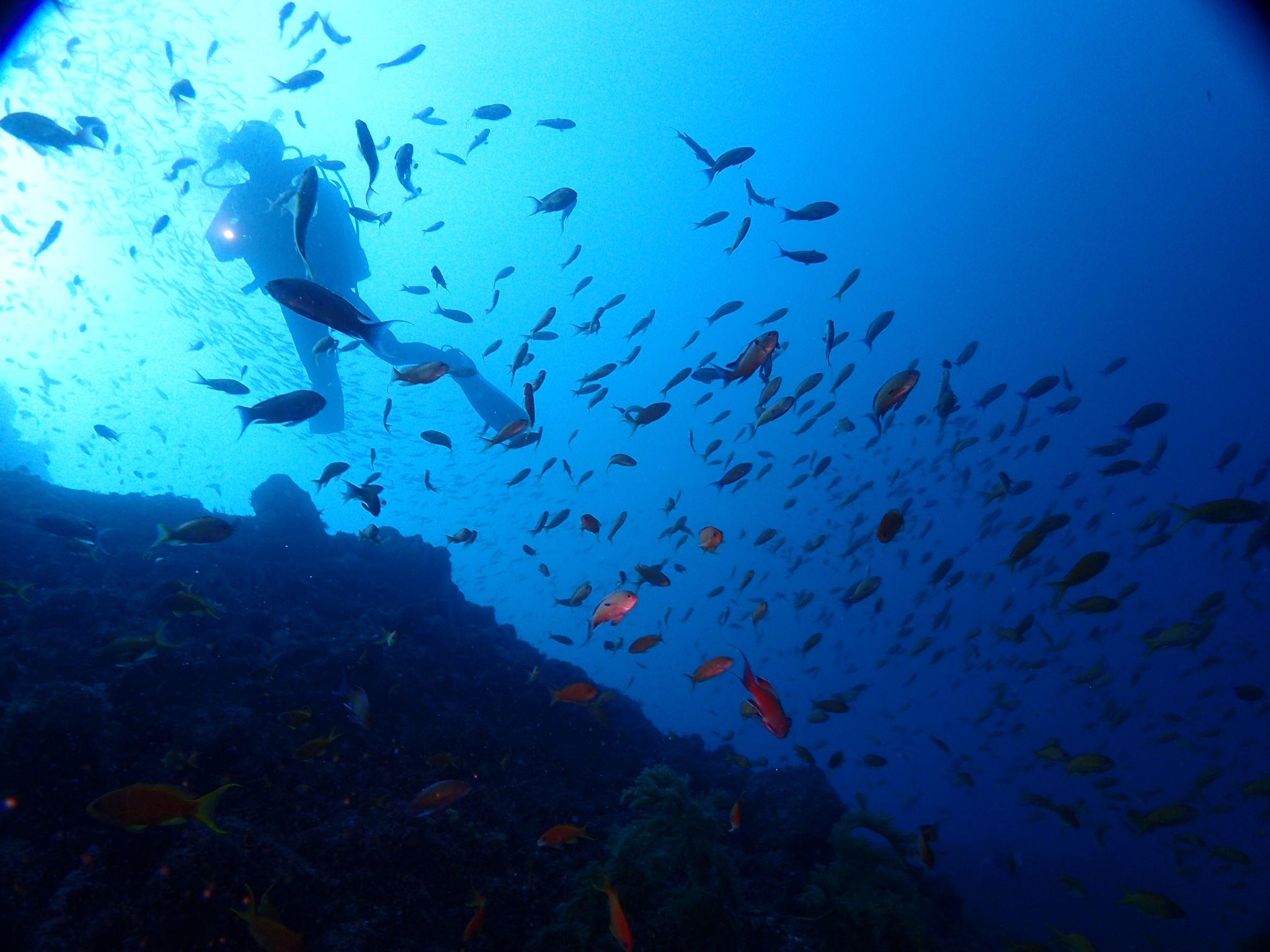 【解説】ダイビングライセンスの種類と違い、指導団体とは?