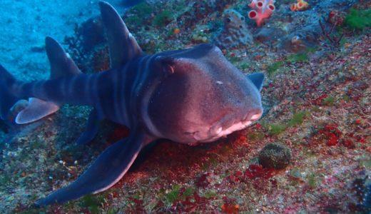オープンウォーター講習:海洋実習では何をやるのか?